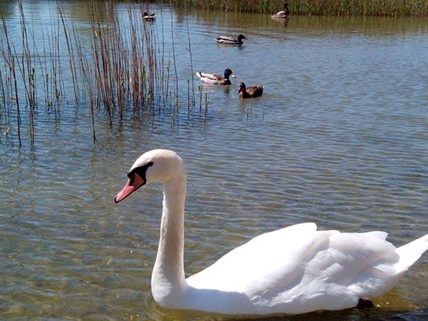 Observación de Aves en Aragón