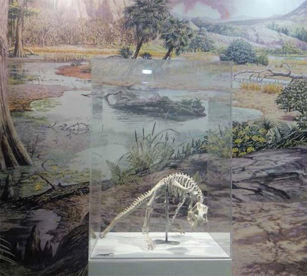 Restos de un dinosaurio en el Museo de Ciencias Naturales, en el Paraninfo