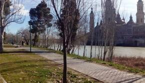 Un Gigantesco Camposanto en la Arboleda de Macanaz