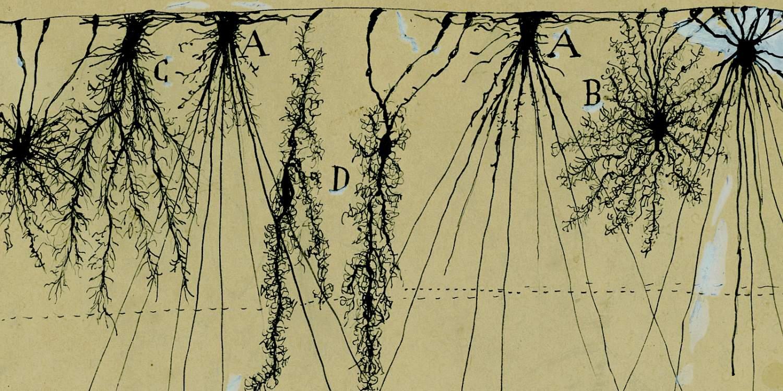 descubrimientos de ramon y cajal