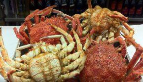 Las mejores marisquerías de Zaragoza lo mejor del mar en la mesa