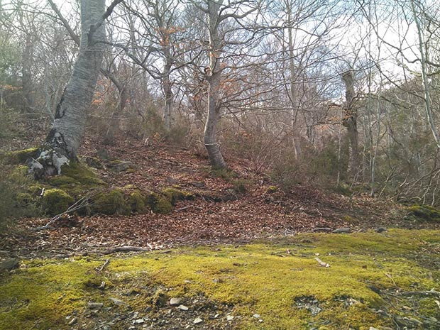 Escapada al Parque Natural del Moncayo bosque de hayas