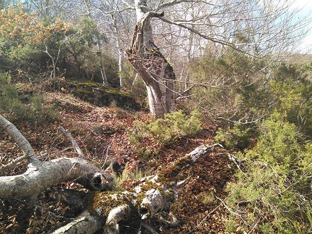 Escapada al Parque Natural del Moncayo hayedo