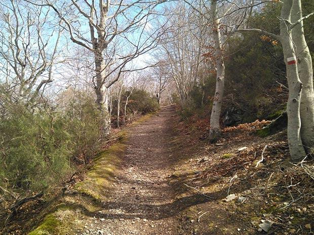 Bosque de hayas en el Parque Natural del Moncayo