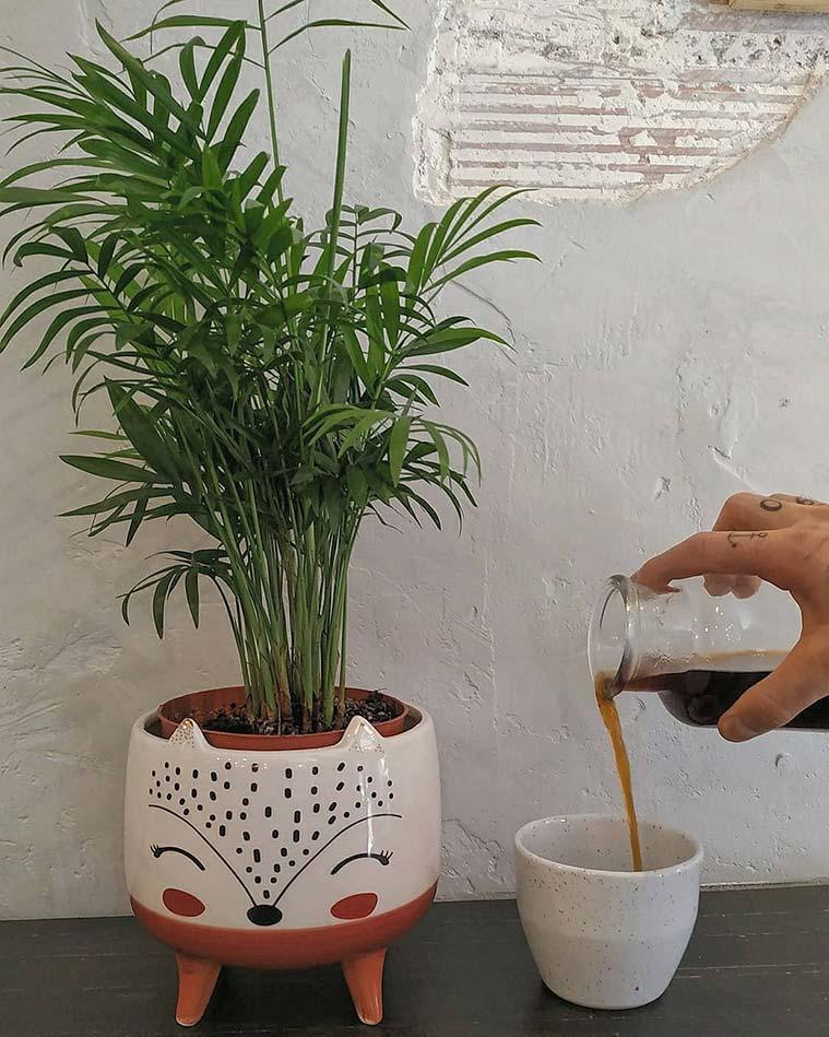 Elio & Coco Speciality Coffee café de especialidad