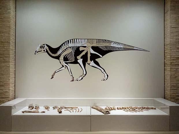 Esqueleto de un dinosaurio en el Museo de Ciencias Naturales de la Universidad de Zaragoza