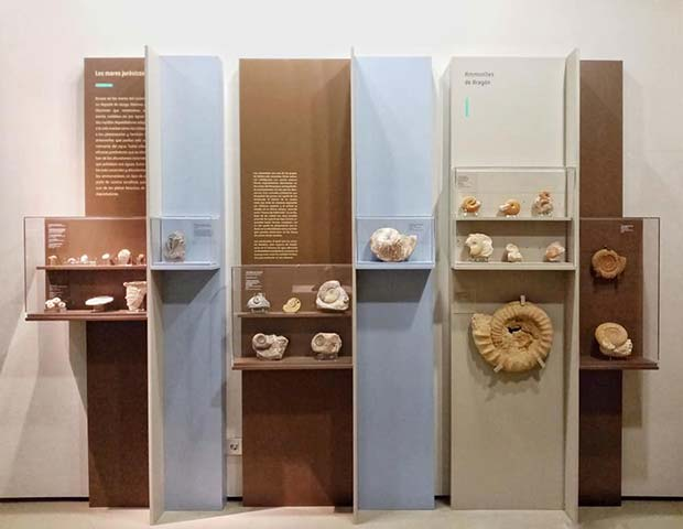 Fósiles en el Museo de Ciencias Naturales de Zaragoza
