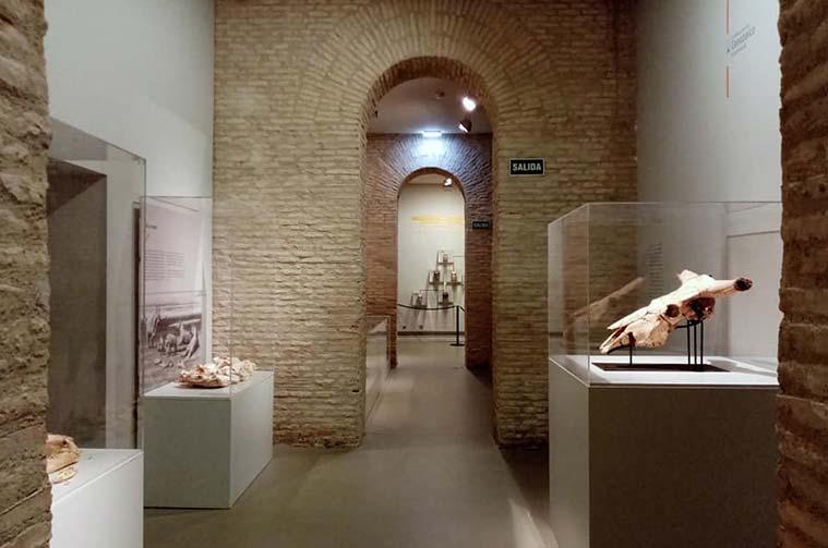 Museo de Ciencias Naturales de la Universidad de Zaragoza