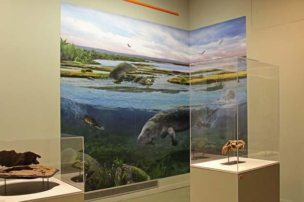 Restos de un dinosaurio acuático en el Museo de Ciencias Naturales de Zaragoza