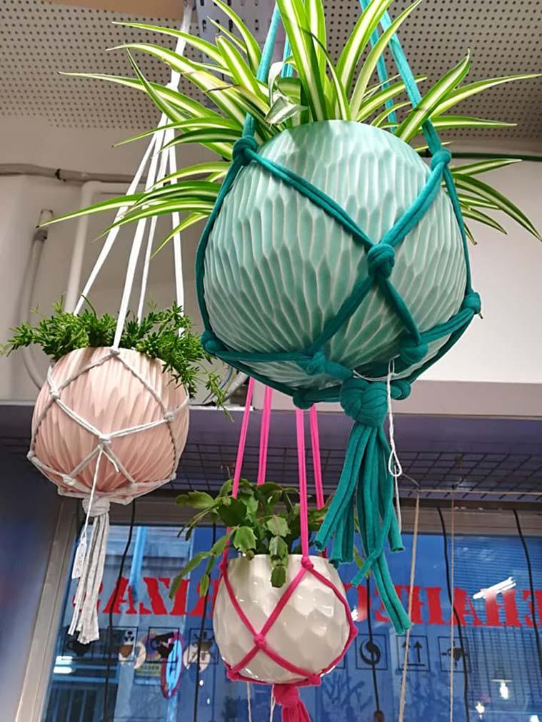 Sehahechotrizas plantas colgantes