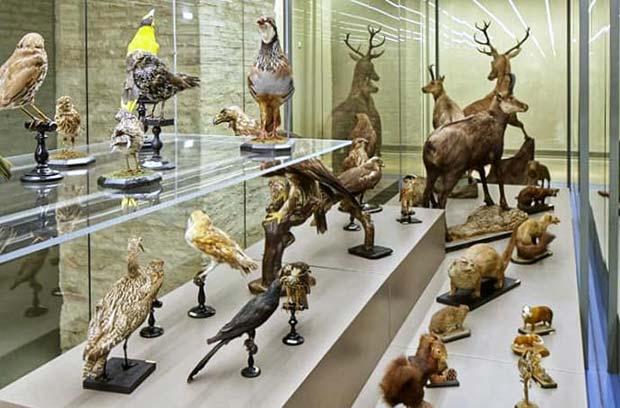 animales disecados en el Museo de Ciencias Naturales de Zaragoza