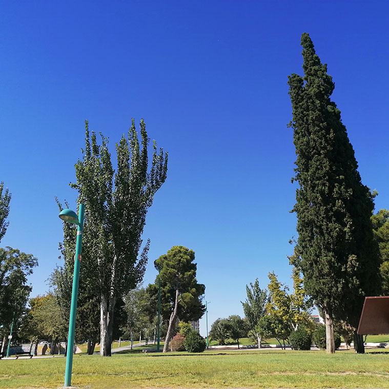arboles en el parque de Mazanaz