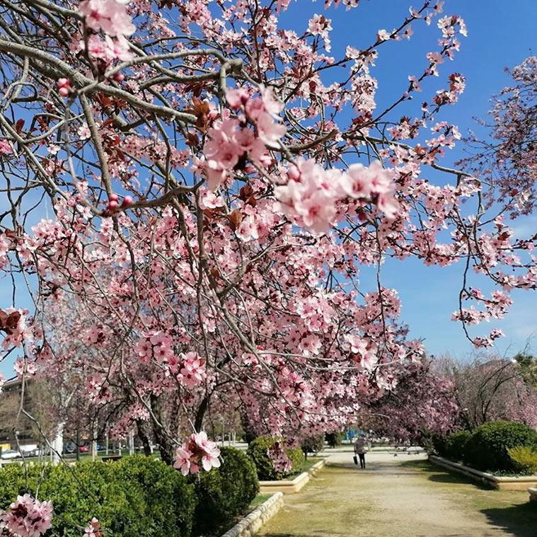 Las primeras flores son la señal de la proximidad de la primavera