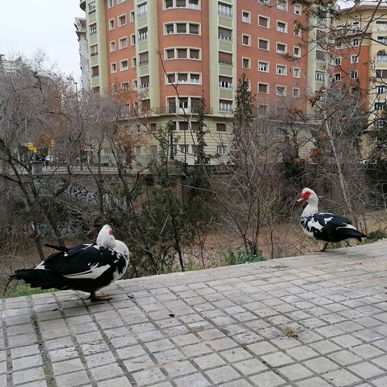 aves en el rio huerva de zaragoza