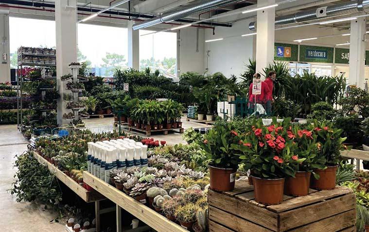Los mejores lugares para comprar plantas en Zaragoza