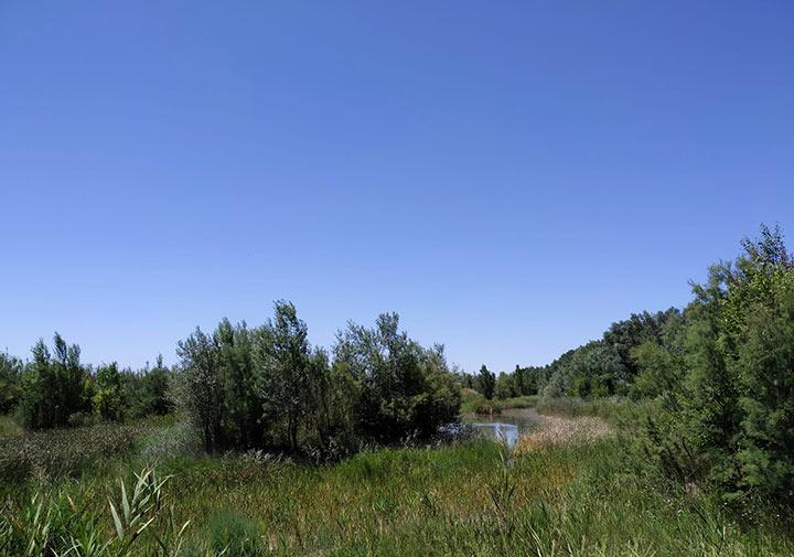 el galacho de juslibol laguna