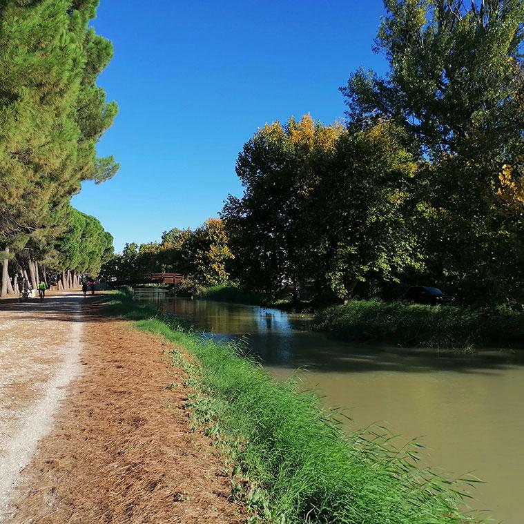 A lo largo del centenario canal hay plantados más de 60.000 árboles -muchos de ellos, gigantescos plataneros- que contribuyen a hacer del lugar un excepcional paisaje natural