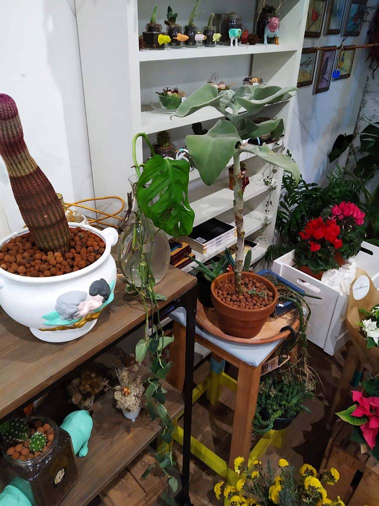 Artefacto Taller Creativo plantas