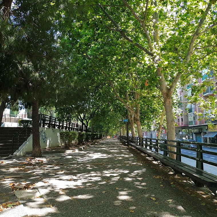 Paseo arbolado de plátanos de sombra en la Plaza Mayor de San José