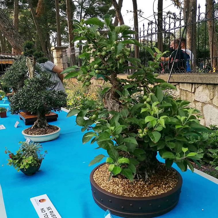 Exposición de Bonsáis en la entrada del Jardín Botánico