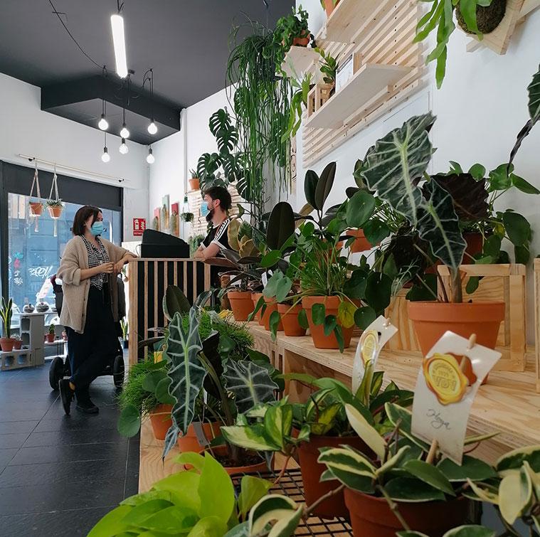 La Plantería concept store botánica